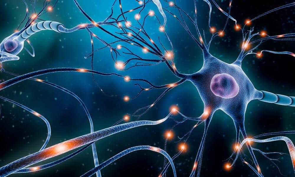 La neuroplasticidad thumbnail